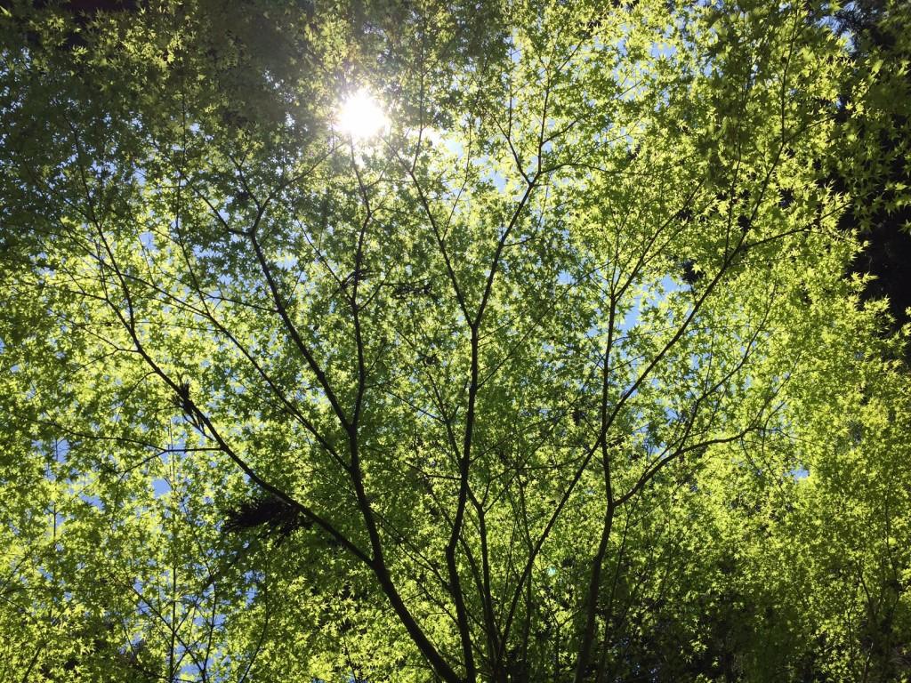 若葉のグリーン