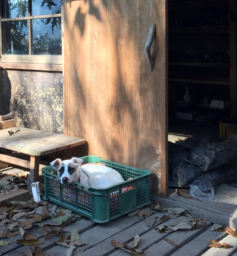 potter's dog