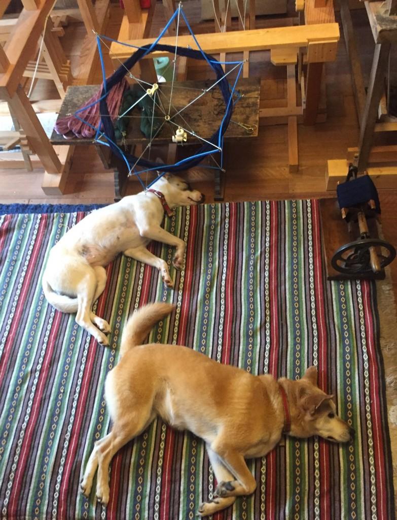 眠い犬たち