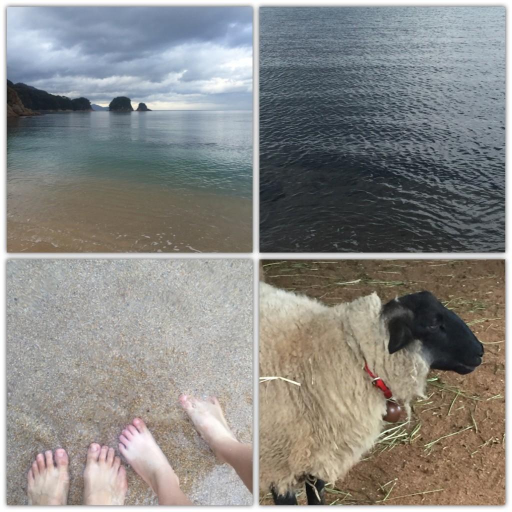 秋の海と羊と足