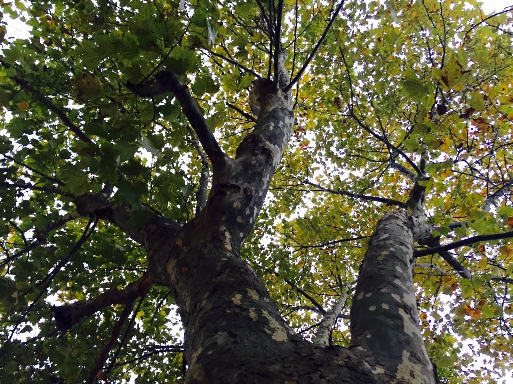 A tree in Sakai